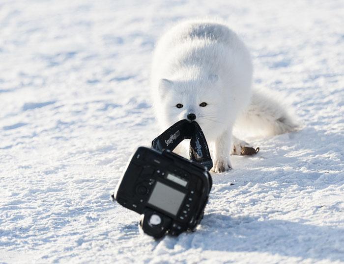 funny-animals-pics-comedy-wildlife-photography-awards-5-5b07b85a374ce__700