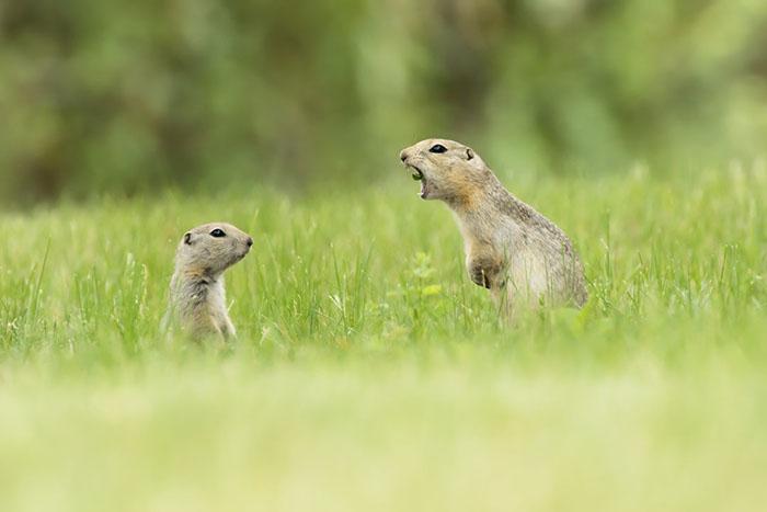 funny-animals-pics-comedy-wildlife-photography-awards-6-5b07b85bb8da0__700