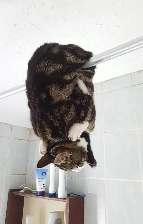 funny-idiot-cats-22-5ae022ccedc65__605