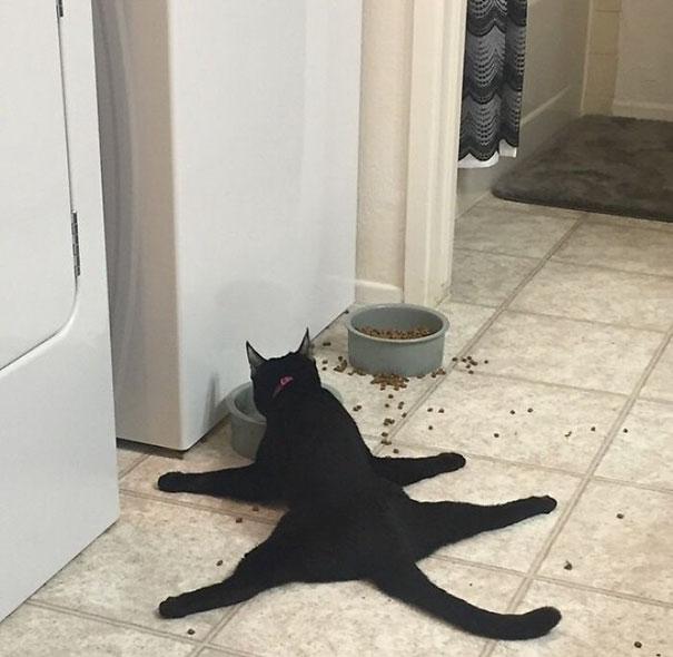 funny-idiot-cats-23-5ae0243ff107e__605