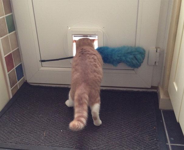 funny-idiot-cats-260-5ae07e5331937__605