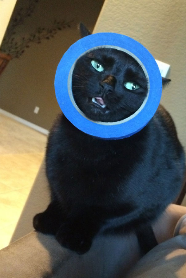 funny-idiot-cats-262-5ae07eaa6de91__605