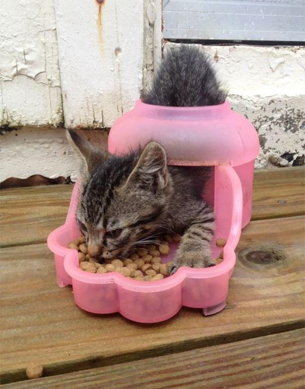 funny-idiot-cats-263-5ae07ee2e20cf__605