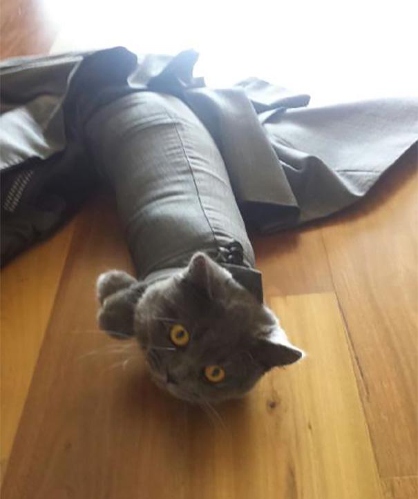 funny-idiot-cats-264-5ae07f159448e__605
