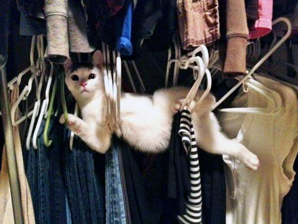 funny-idiot-cats-43-5ae6e2d4dafcb__605