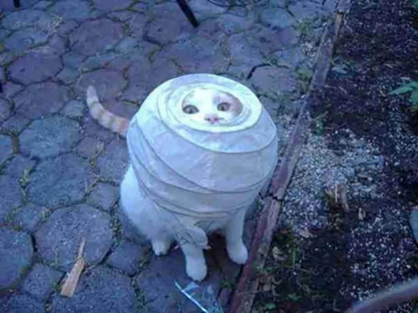 funny-idiot-cats-44-5ae6e682e036e__605