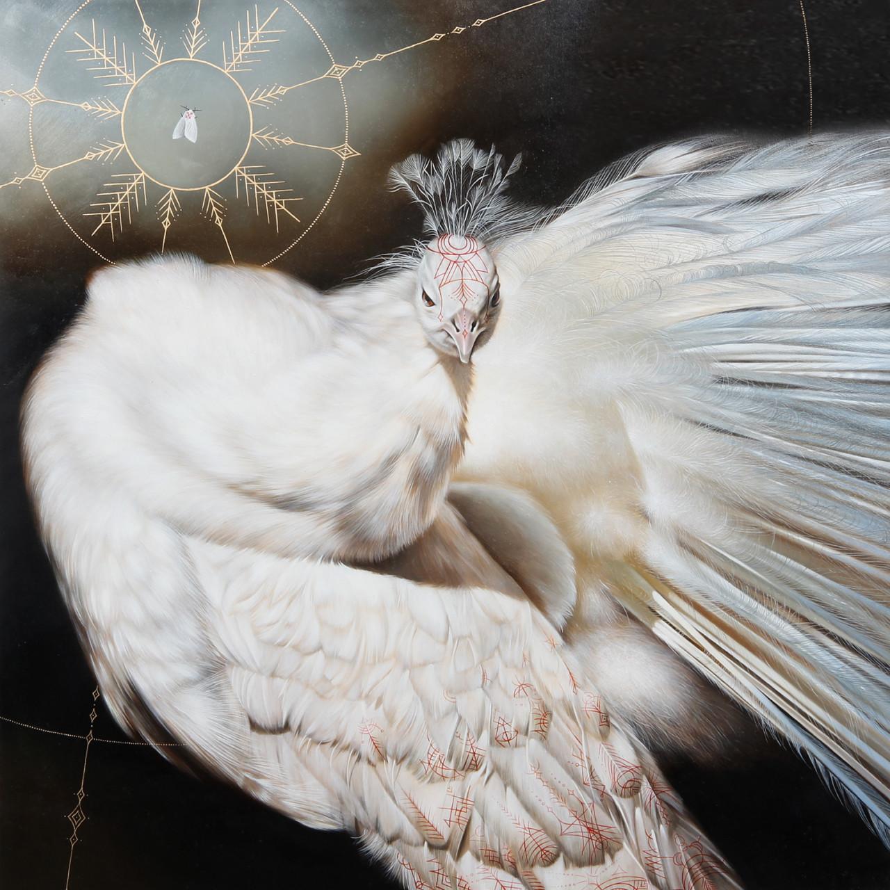 morway_peacock-640x640@2x