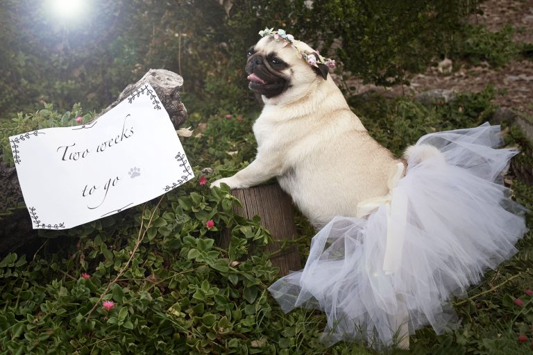 13_CATERS_PUG_PHOTO_SHOOT_02-768x511