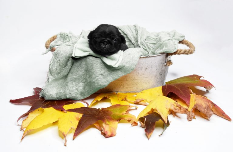 20_CATERS_PUG_PHOTO_SHOOT_09-768x503