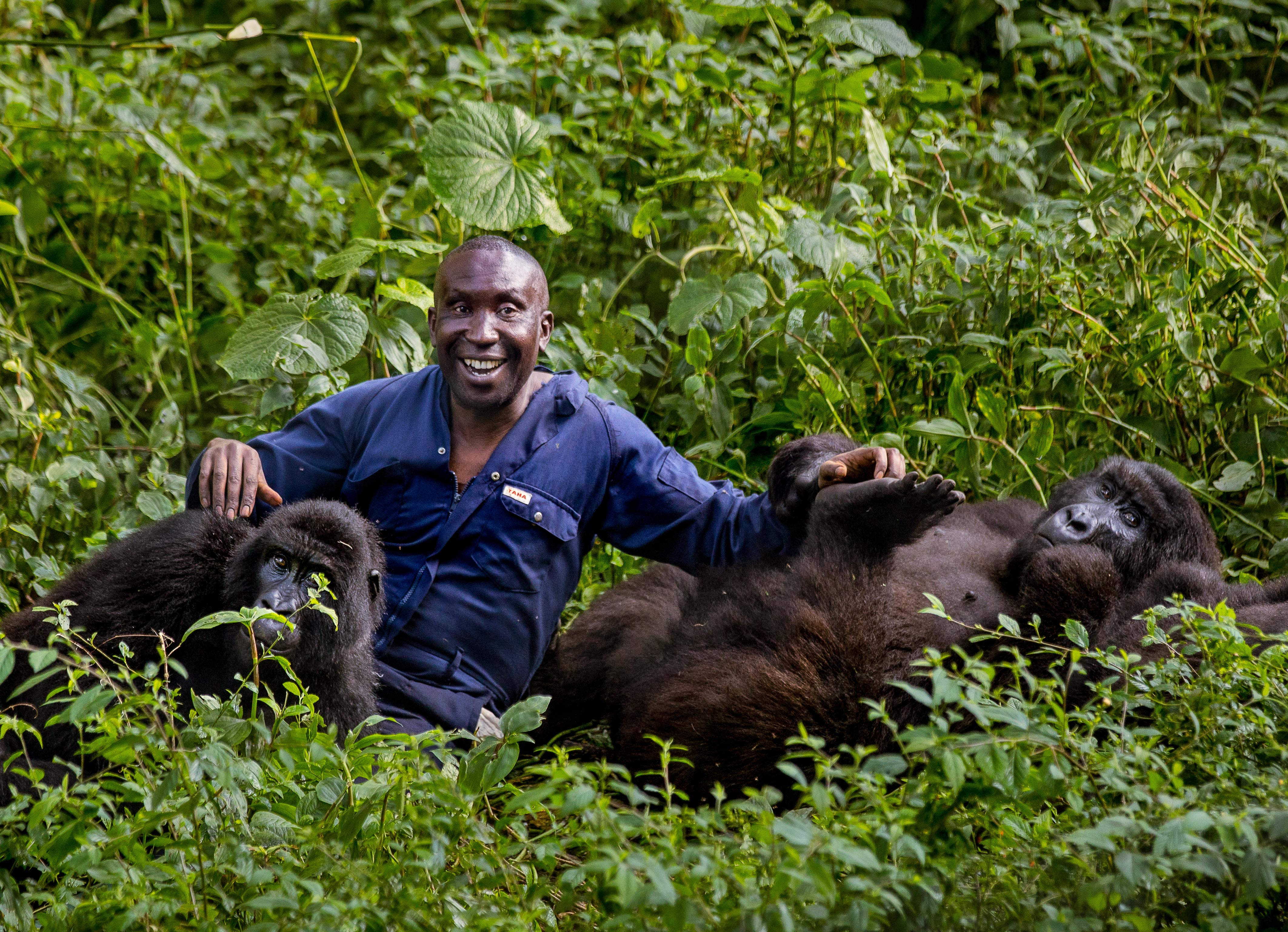 MERCURY PRESS 08/06/18(PICTURED: Ndazi the gorilla shares a moment with her keeper Andre, in the Virunga National Park in the Democratic Republic of the Congo)This gorilla has certainly found a KEEPER as she shares a touching hug with a park ranger working to protect her.Intimate photos show young gorilla Ndazi giving one of her keepers Andre a big hug before jumping on him for a piggyback.Smiling Andre seems more than happy to help her on her way through the jungle.The touching scene was captured on camera by Shannon Witz, from Chicago, USA, when she was visiting the Virunga National Park in the Democratic Republic of the Congo.See Mercury copy