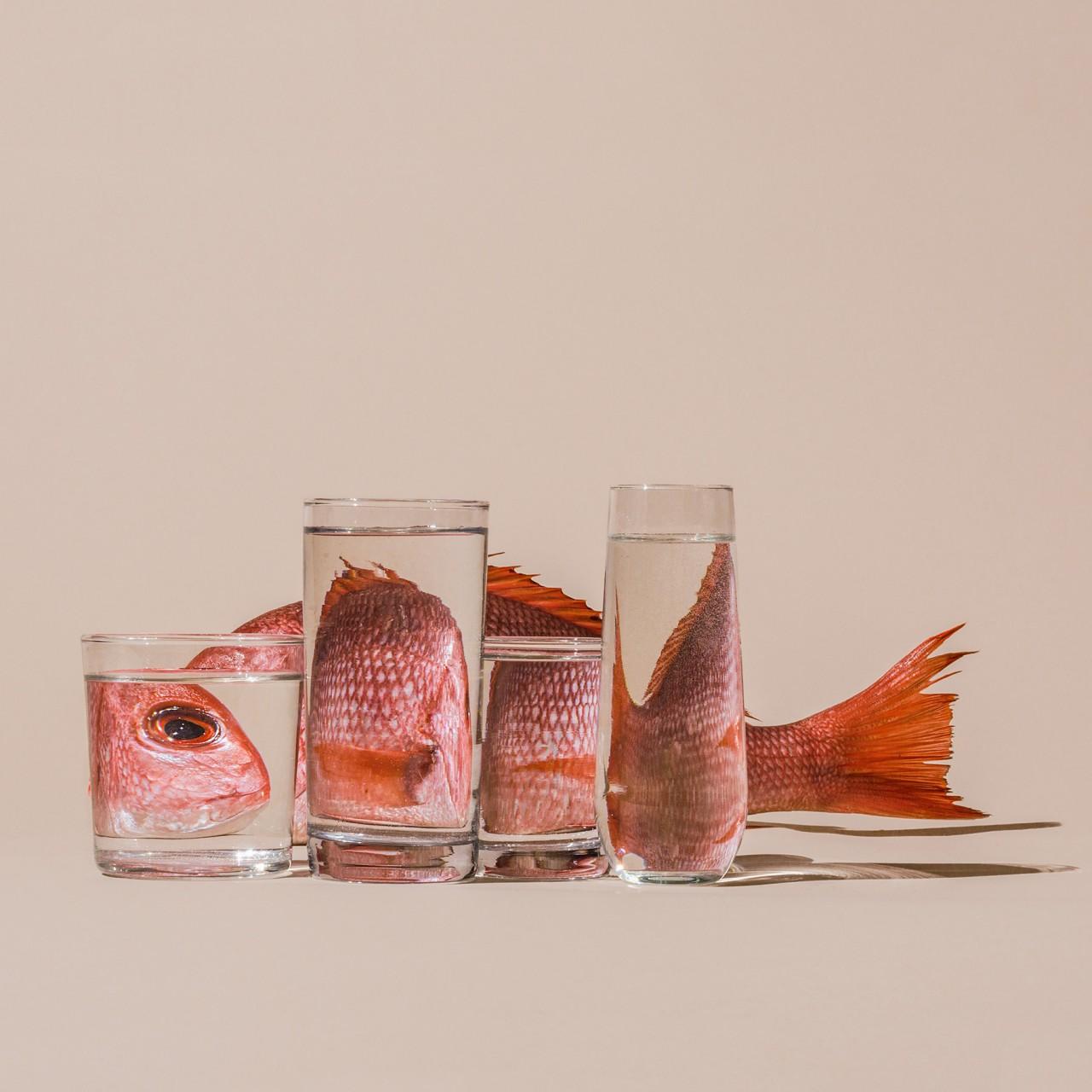 Fish-Behind-Water.SuzanneSaroff-640x640@2x