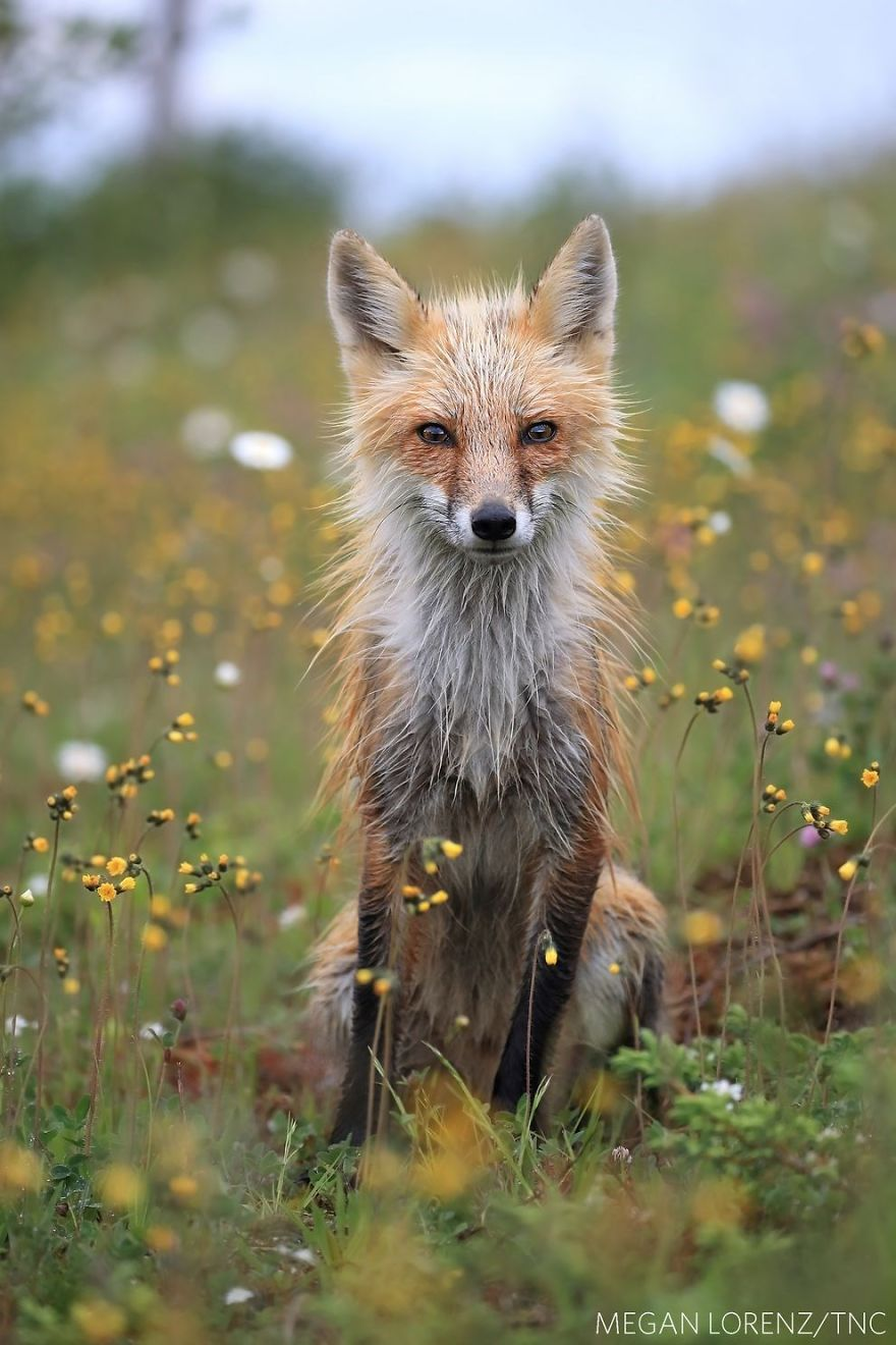 The-winners-of-The-Nature-Conservancy-photo-contest-were-announced-and-the-photos-are-really-amazing-5b32dc0e50b58__880