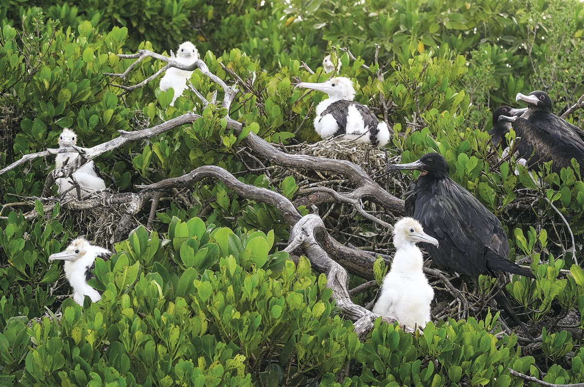 aves-marinas-seychelles_3b0285ef_1200x796