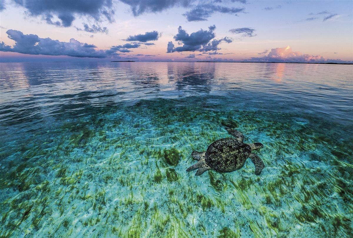 tortuga-aldabra-seychelles_df324381_1200x808