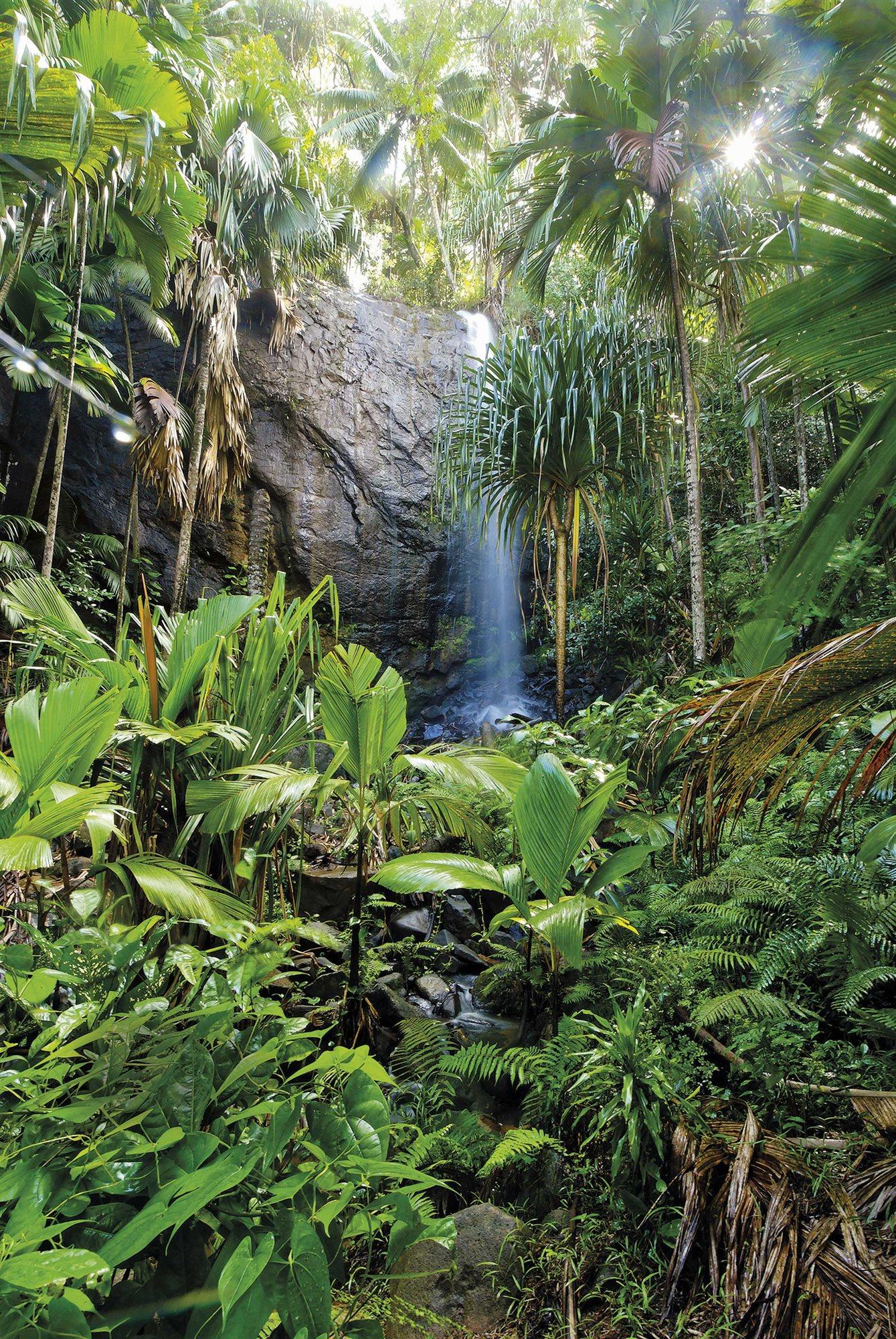 valle-de-mai-praslin-seychelles_510d095c_1339x2000